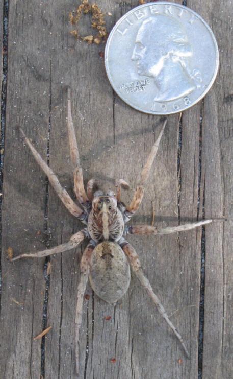 spiderblogsmall.jpg